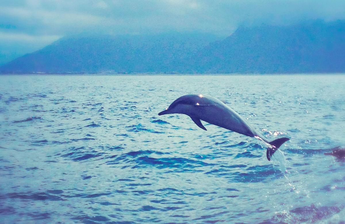 航向太平洋-賞鯨